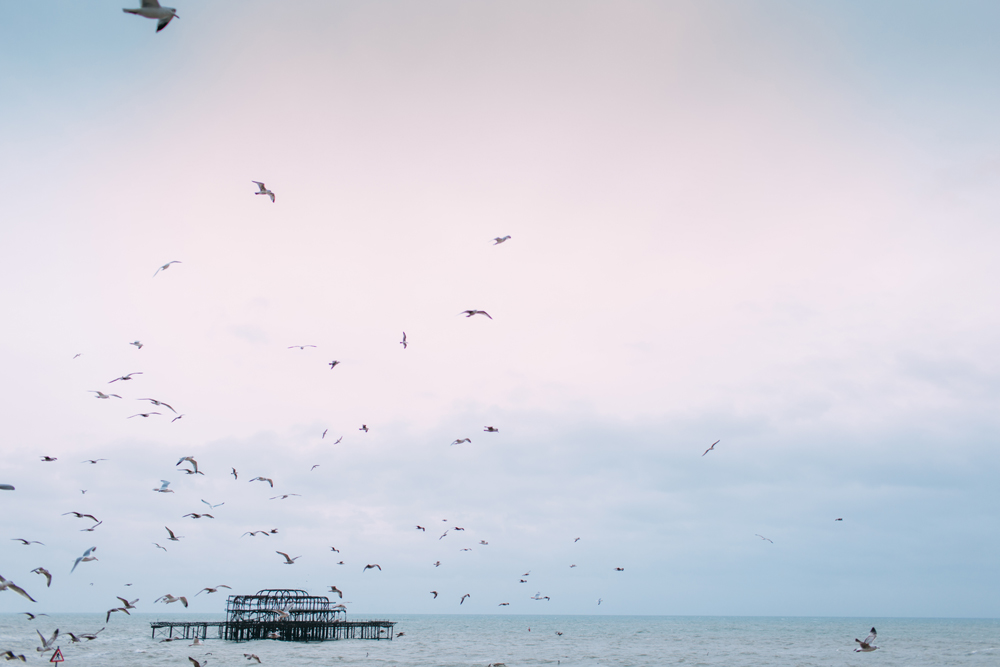 seagulls on Brighton beach and west pier