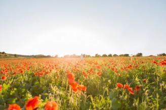 poppy field portrait photo at sunset