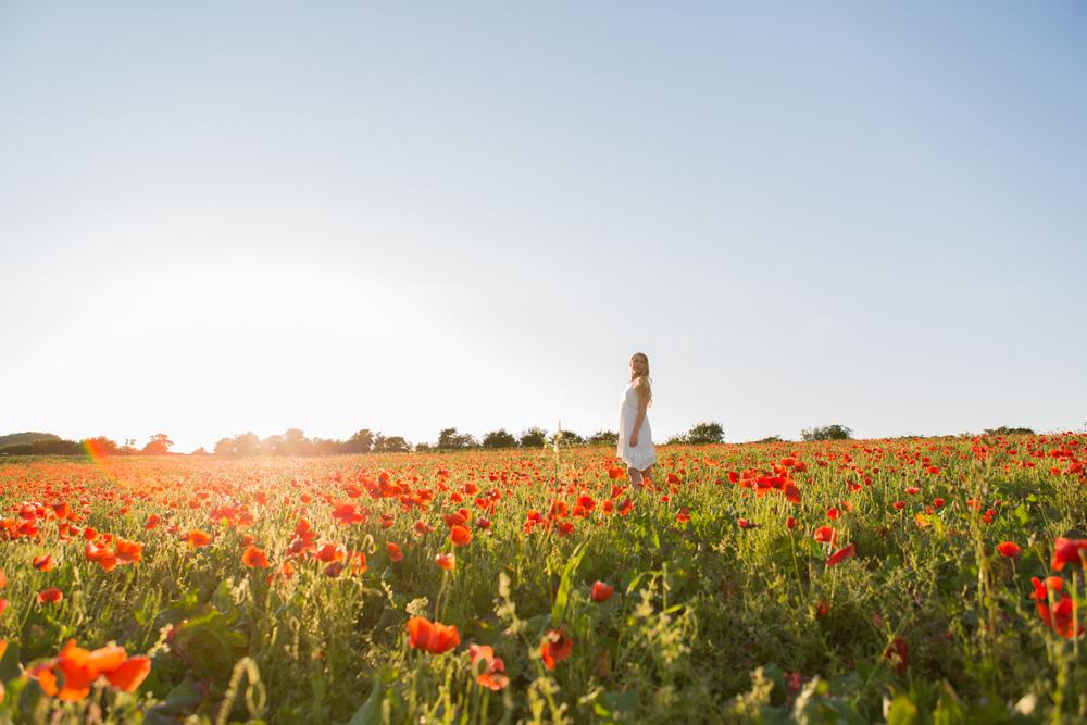 sunset in brighton poppy field