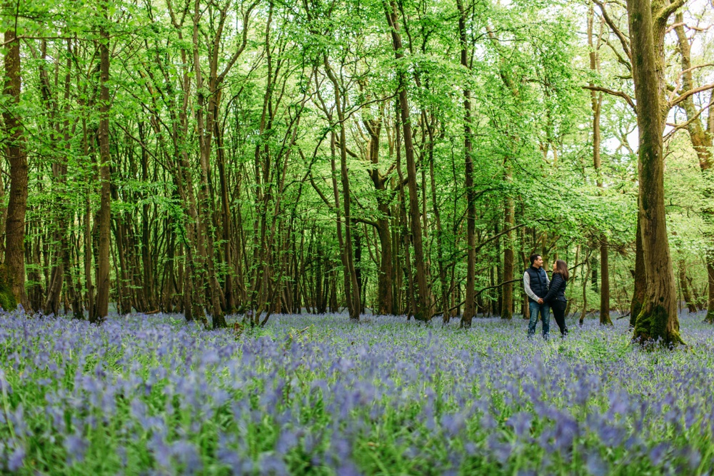 Engagement photography Brighton bluebell woods