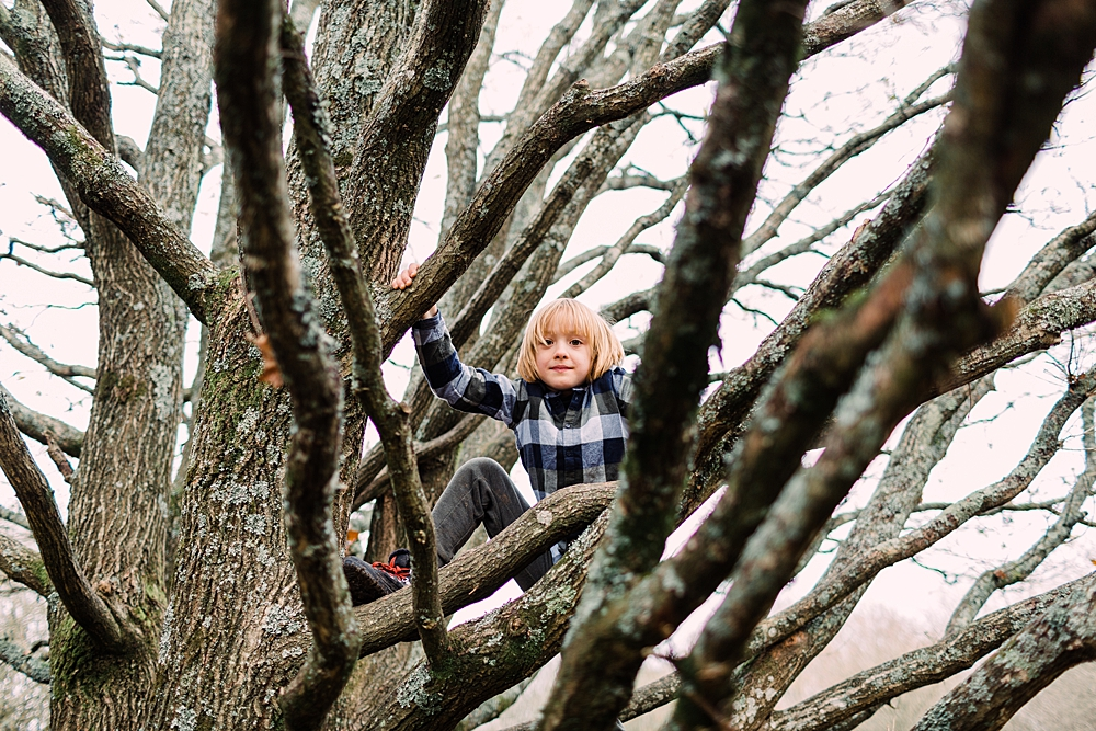 Boy climbing a tree in Ditchling common